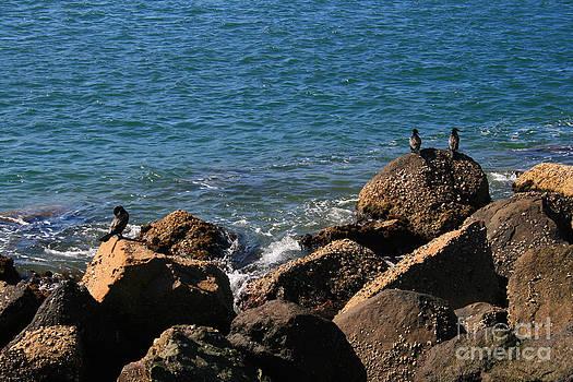 Rocky Coast Seabirds by Sarah Sutherland