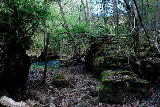 Rocky Fork Spring 06 by Carol Kay
