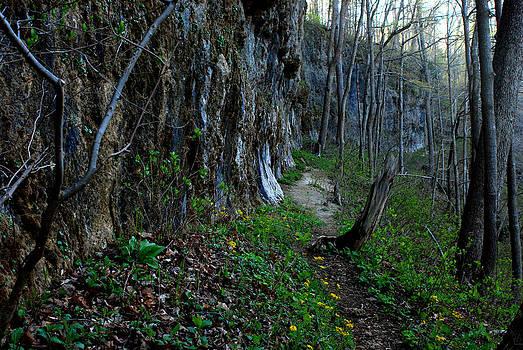 Rocky Fork Spring 09 by Carol Kay