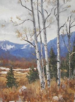 Rocky Mountain Aspen by Robert Stump