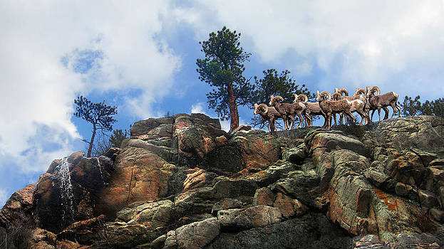 Rocky Mountain Big Horn Herd by Ric Soulen