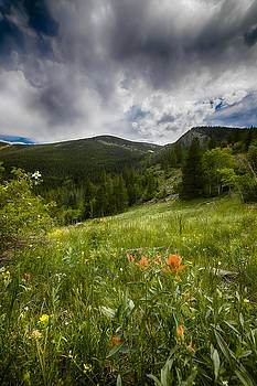 Rocky Mountain Meadow by Garett Gabriel