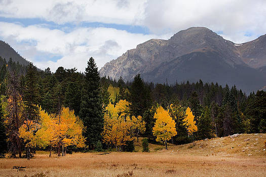 Rocky Mountian Aspens by Don Anderson