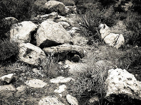 Rocky Path  by  Garwerks  Photography