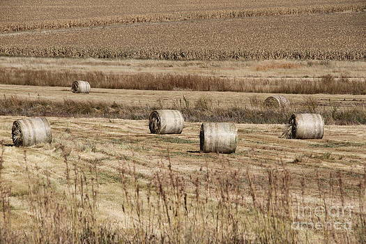 Roll on the hay by Taschja Hattingh