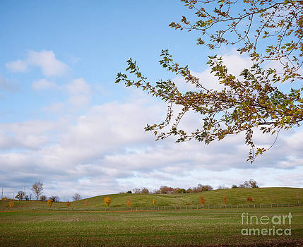 Rolling Hills In Autumn by Mary  Smyth