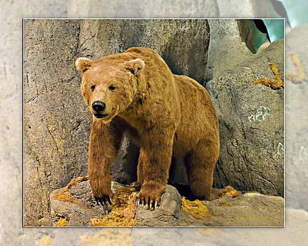 Walter Herrit - Rolling Hills Wildlife Adventure 2
