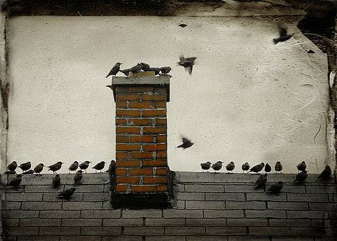 Gothicrow Images - Rooftop Meeting Of The Birds