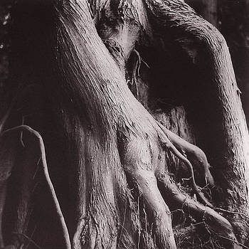 Root Dance by Susan Smith Evans