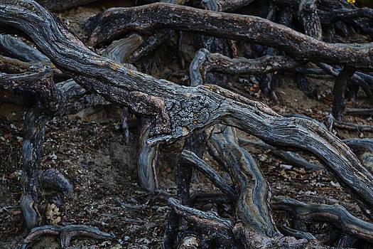 Randal Bruck - Root