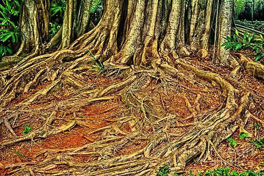 Charles Davis - Roots 5