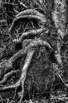 William Reek - Roots in Black and White
