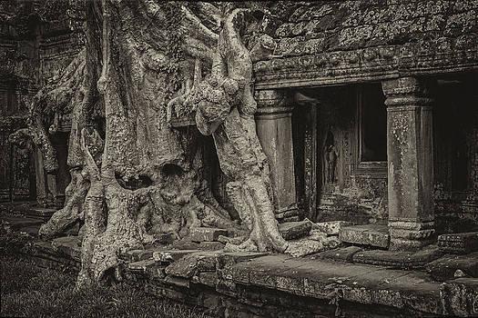 Roots in Ruins 7, Ta Prohm, 2014 by Hitendra SINKAR