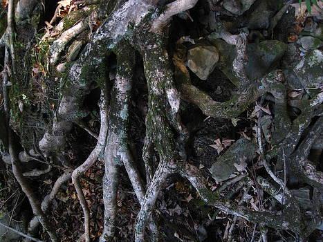 Roots by Jennifer Randall