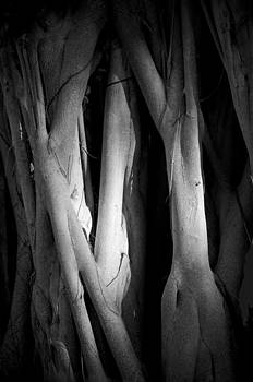 Roots by Nancy Edwards