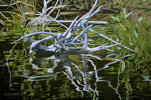 Roots Reflections by Allan OMarra