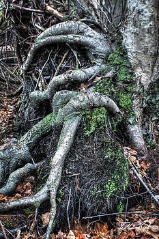 William Reek - Roots