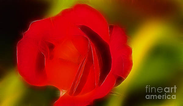 Gary Gingrich Galleries - Rose 6177-Fractal