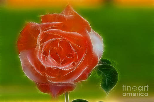 Gary Gingrich Galleries - Rose 6200-Fractal