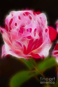 Gary Gingrich Galleries - Rose 6205-Fractal