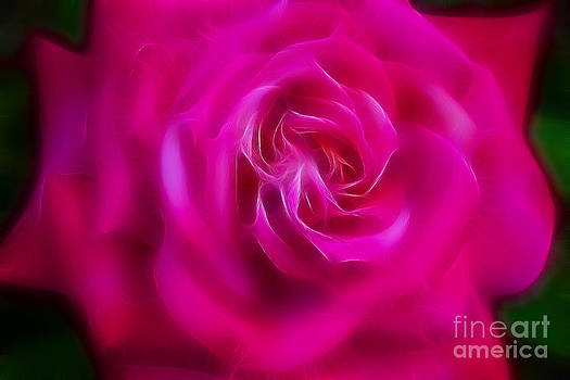 Gary Gingrich Galleries - Rose 6226-Fractal