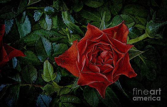 Rose Abstract by Dee Johnson