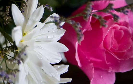 Rose and Daisy by John Holloway