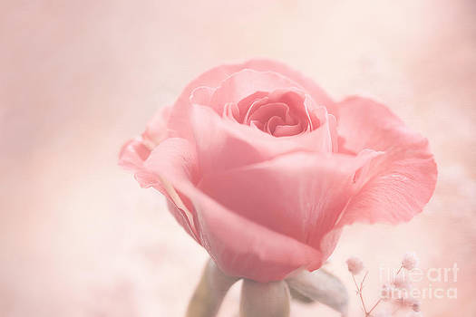 LHJB Photography - Pink Beauty