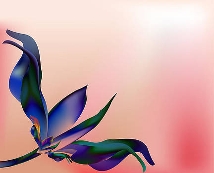 Rose BLUE petal flower  shell on pink by Larisa Karpova