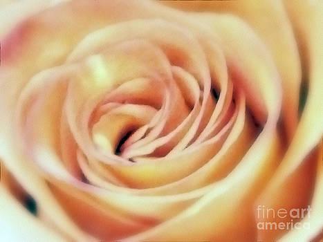 Rose Blush by Andrea Kollo