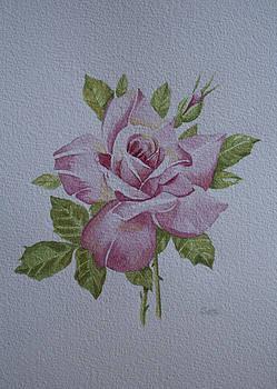 Rose by Carol De Bruyn