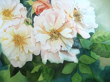 Rose Celsiana by Stephanie Zobrist