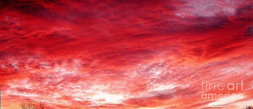 Rose Colored Sunset by Julia  Walsh