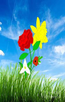 Rose Daffo Trillium  Poppy by Matt Brown