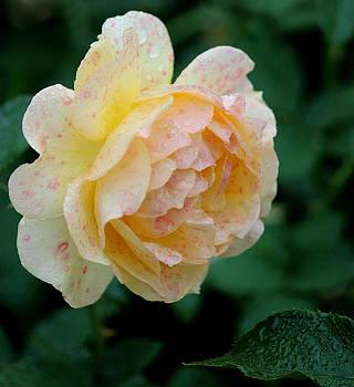 Rosanne Jordan - Rose Especial