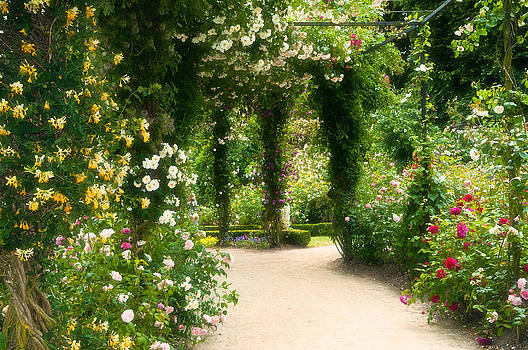 Rose Garden at Alnwick by Sarah-fiona  Helme