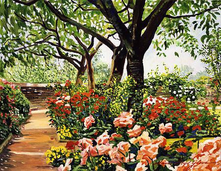 David Lloyd Glover - Rose Garden Impressions