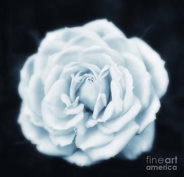 LHJB Photography - Rose
