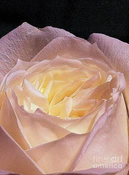 Rose I by Waverley Manson