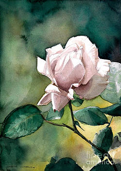 Watercolor of a Lilac Rose  by Greta Corens