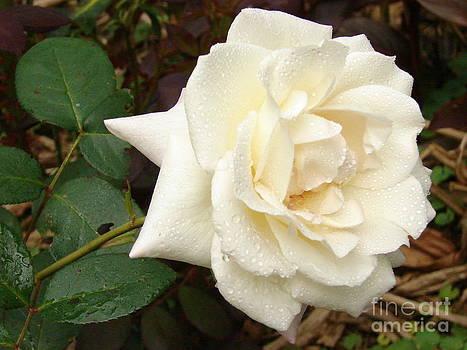 Rose In The Rain by Leara Nicole Morris-Clark