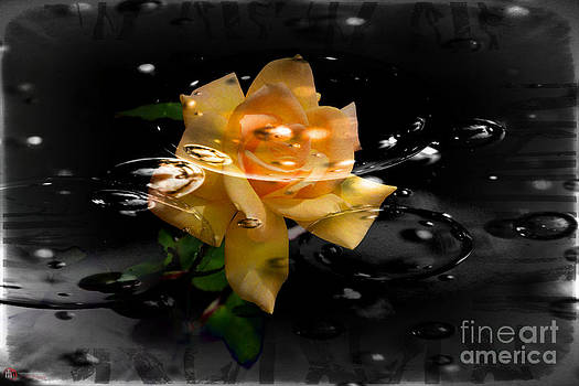Rose in water by Rob Heath