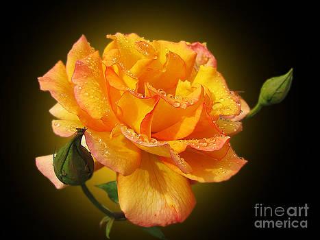 Rose by Irina Gladkaja