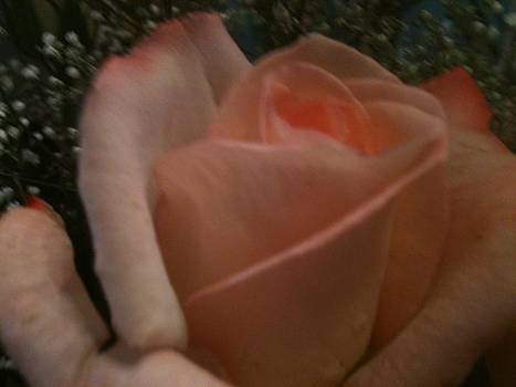 Rose Kiss by Jessi Hersey
