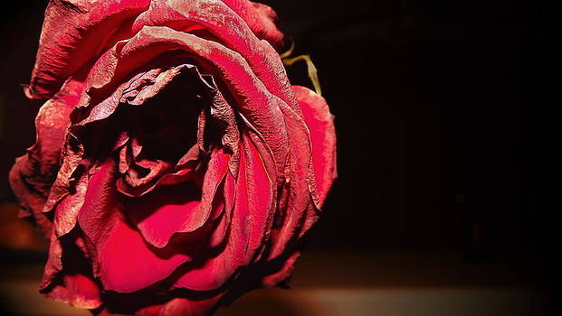 Rose by Maideline  Sanchez