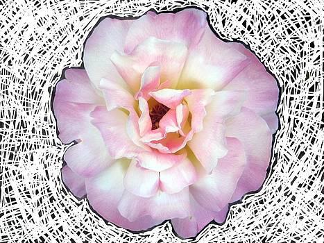Rose by Margaret Lindsay Holton