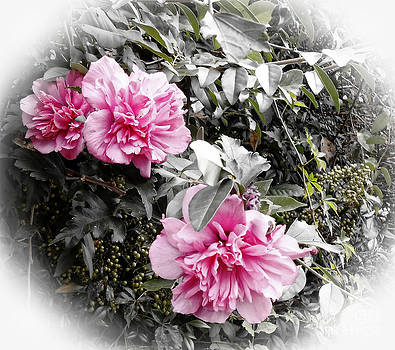 Rose of Sharon-Vintage Warmth by Eva Thomas