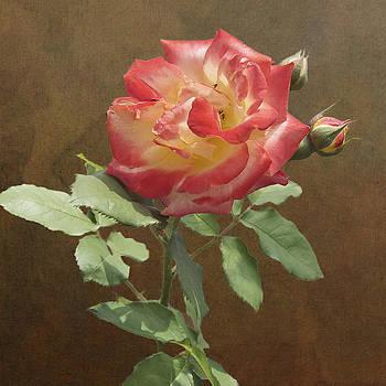 Michael Peychich - Rose on Thornridge Road
