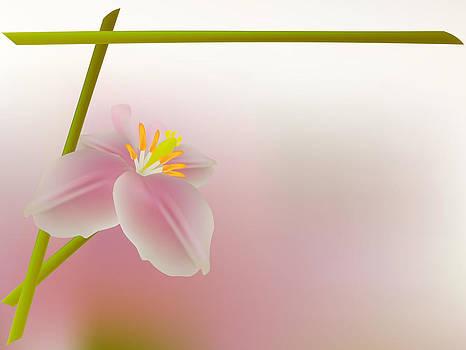Rose petal flower shell on pink background by Larisa Karpova