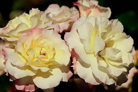 Rosanne Jordan - Rose Ruffles
